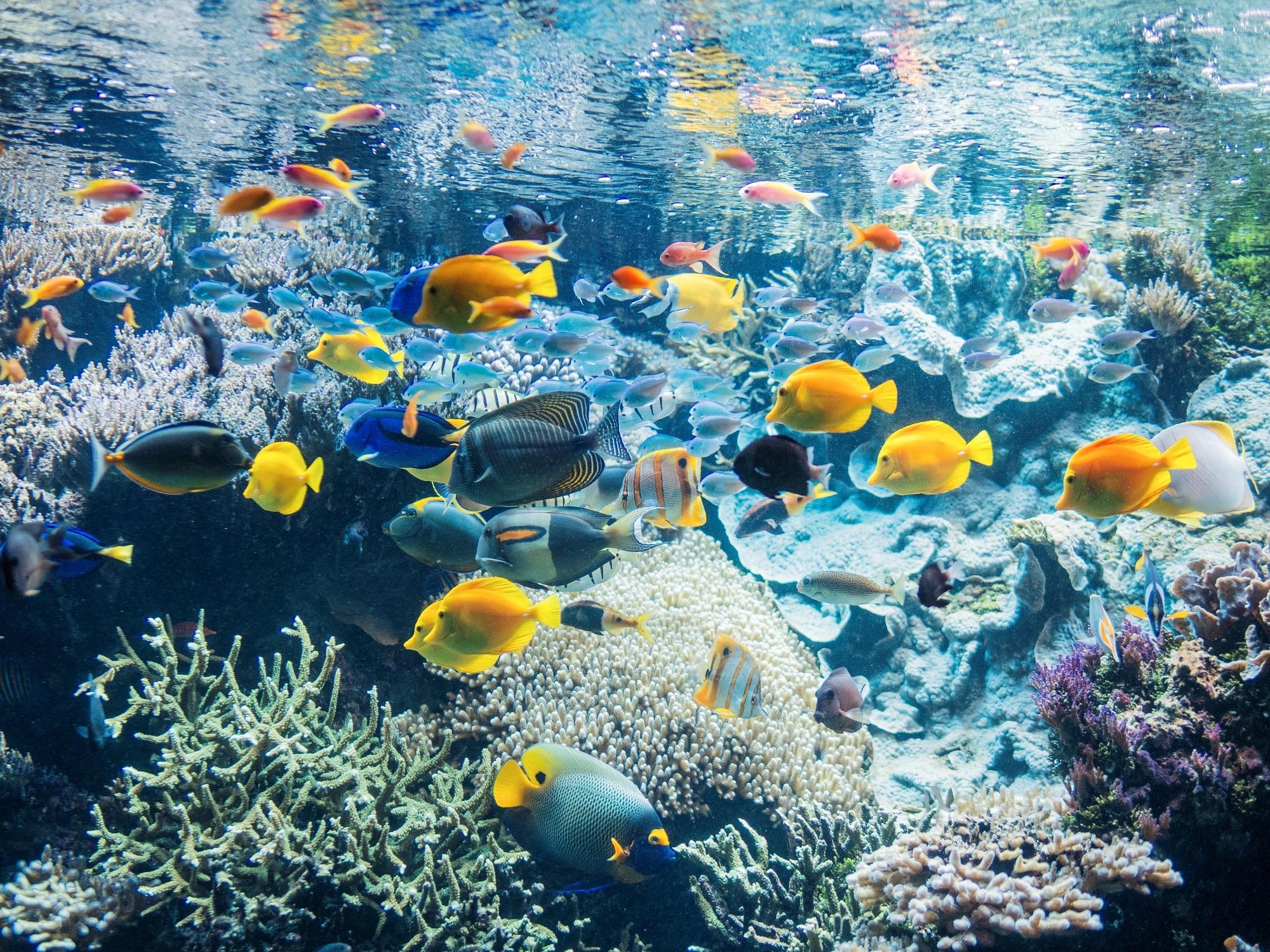 Aquarium-pavillon-tropical-1—Copyright-Benjamin-Deroche
